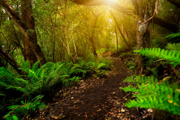 beautiful rainforest jungle tasmania australia 31965 5615